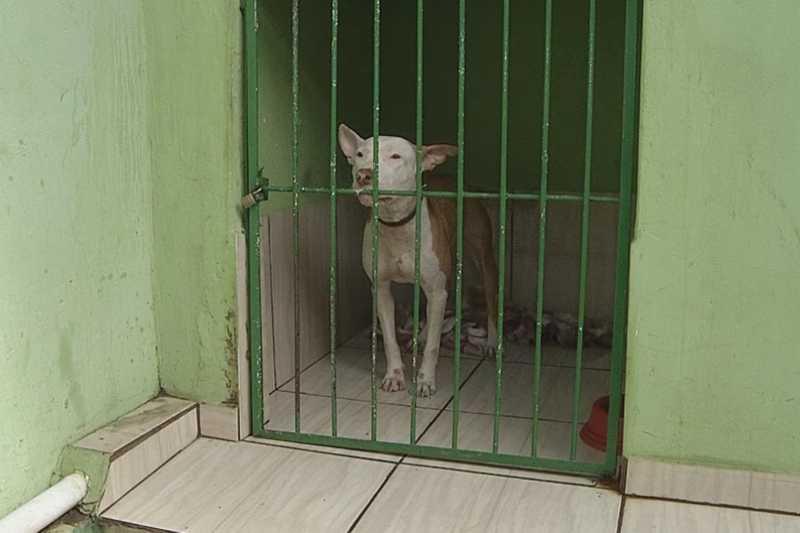 Comissão dos Direitos dos Animais da OAB busca conscientizar pessoas sobre maus-tratos de animais em Ourinhos — Foto: Reprodução/TV TEM