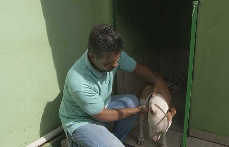Cachorros foram levados para uma clínica veterinária para atendimento médico — Foto: Reprodução/TV TEM