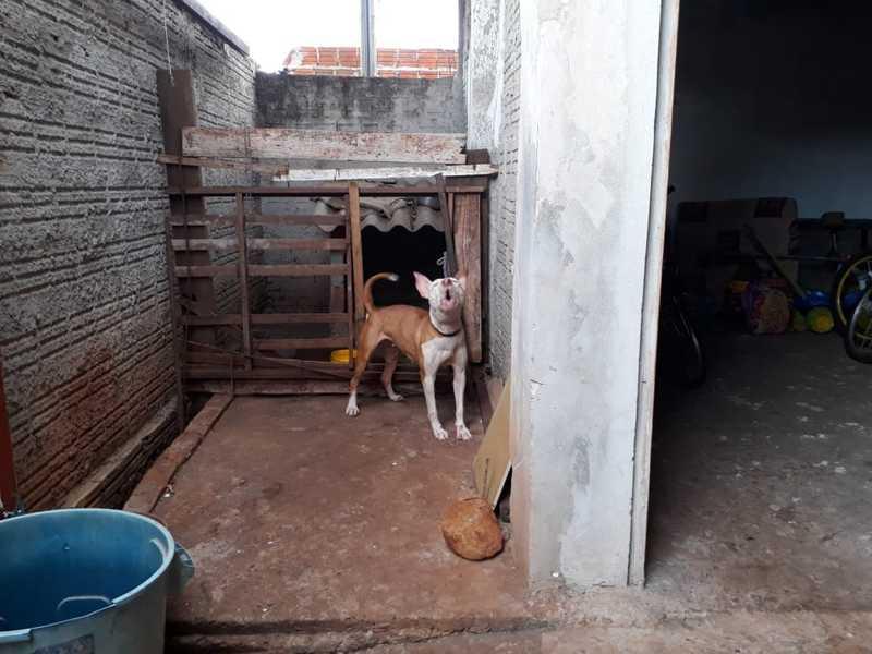 ONG resgata cachorros vítimas de maus-tratos em Ourinhos — Foto: Arquivo pessoal/Nilce Araújo