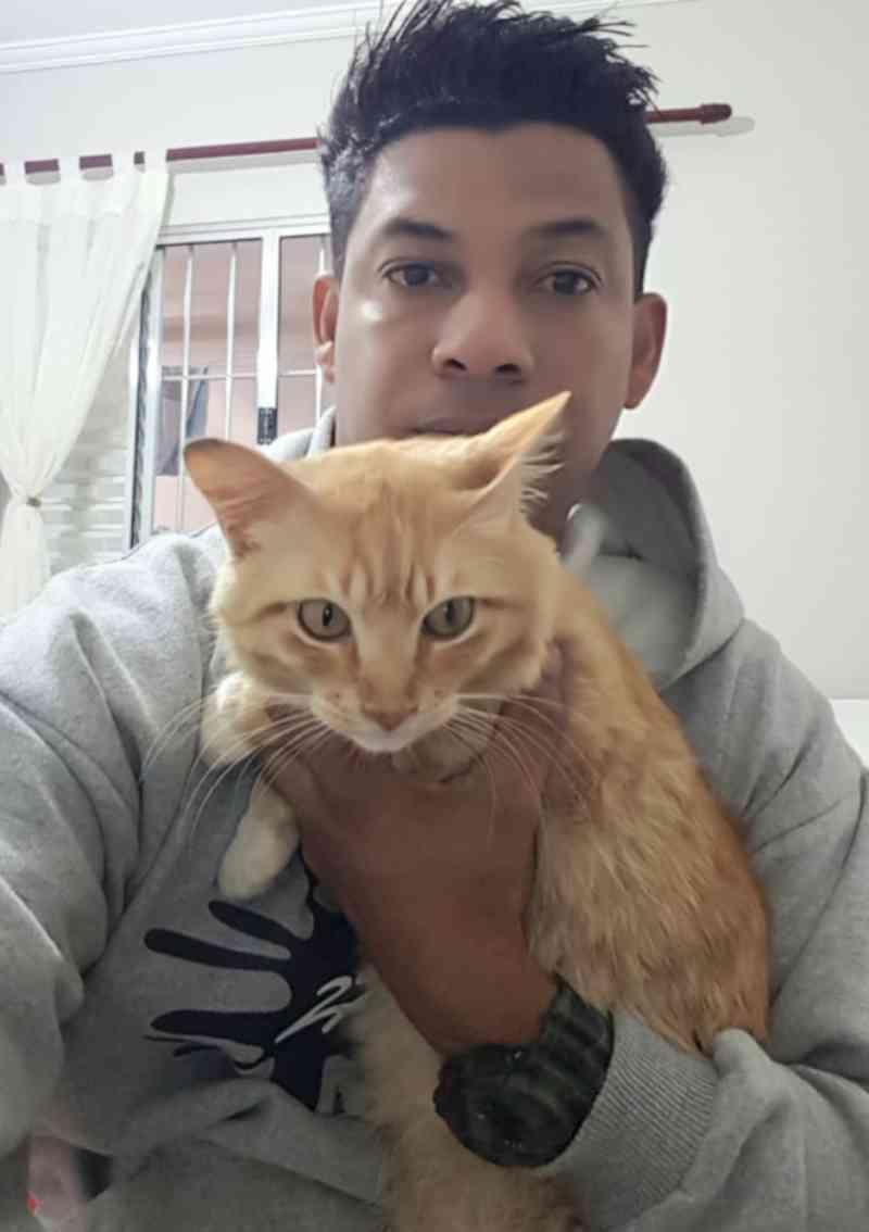 Protetor resgata gato em avenida movimentada de Osasco, SP
