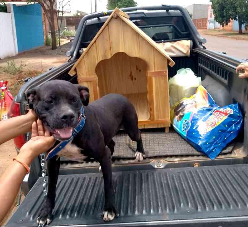 Abrigo de animais abandonados aposta em histórias 'fofas' para incentivar adoção no interior de SP