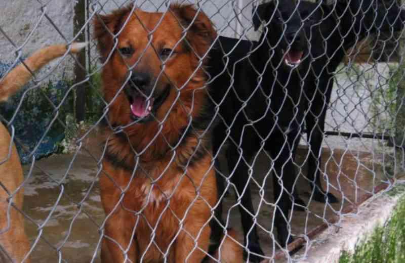 Prefeitura da início a obras de revitalização de abrigo de animais em Pindamonhangaba, SP