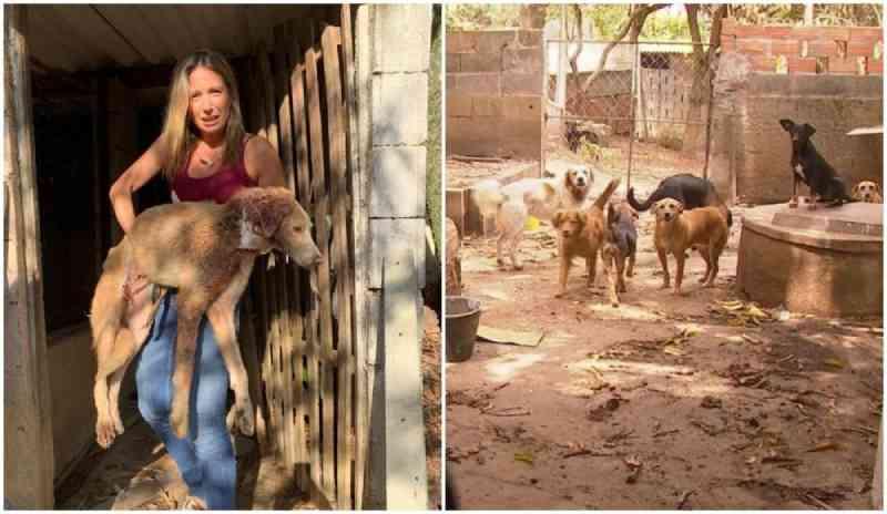 Ativistas começam a retirar 80 cães e gatos deixados após morte de casal de idosos no mesmo fim de semana