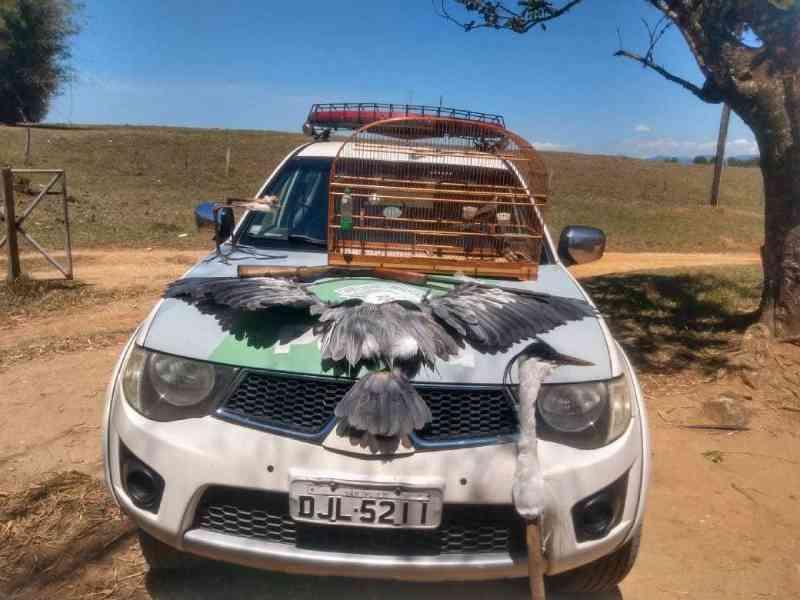 Polícia flagra ave em cativeiro e garça abatida em Potim (SP) neste domingo
