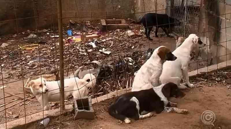 ONGs que cuidam de animais abandonados enfrentam falta de dinheiro e estrutura em Sorocaba, SP