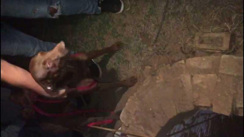 Cão é retirada de poço desativado em Araçatuba — Foto: Arquivo pessoal
