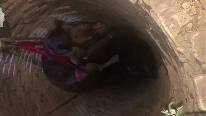 Cachorro foi içado com uma corda em Araçatuba — Foto: Arquivo pessoal