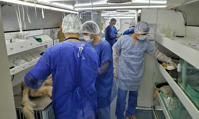 Em seis meses, 2.550 animais são esterilizados pelo Castramóvel em Bragança Paulista, SP