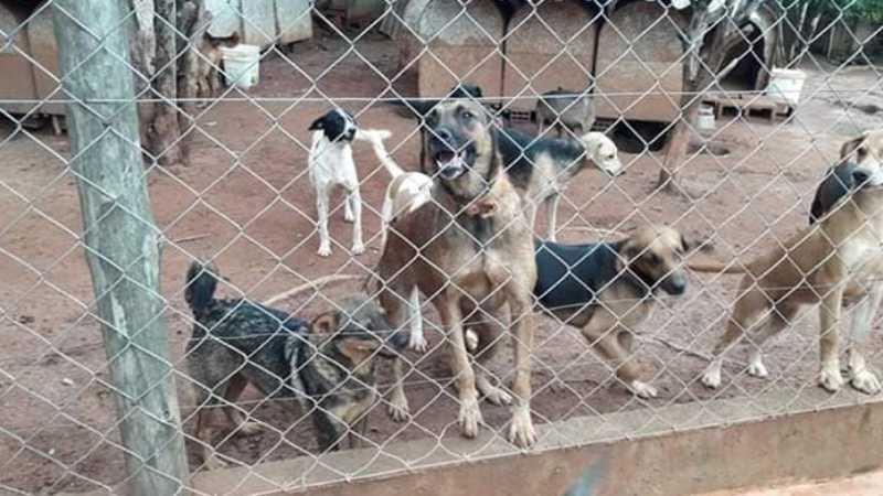 ONG precisa de ajuda para cuidar de animais (Foto: Divulgação)