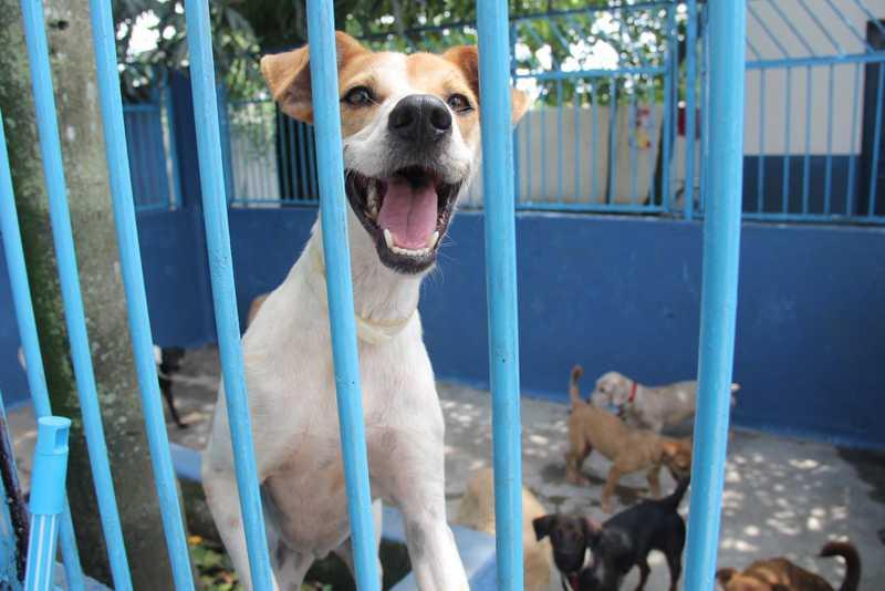 Animais adotados no Canil de Guarujá (SP) já saem microchipados