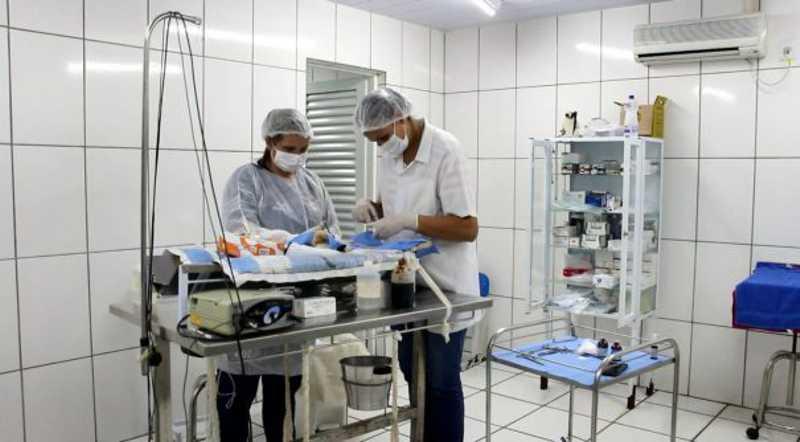 BEA já realiza castração; campanha beneficiará cerca de 800 cães e gatos em Mogi Mirim, SP