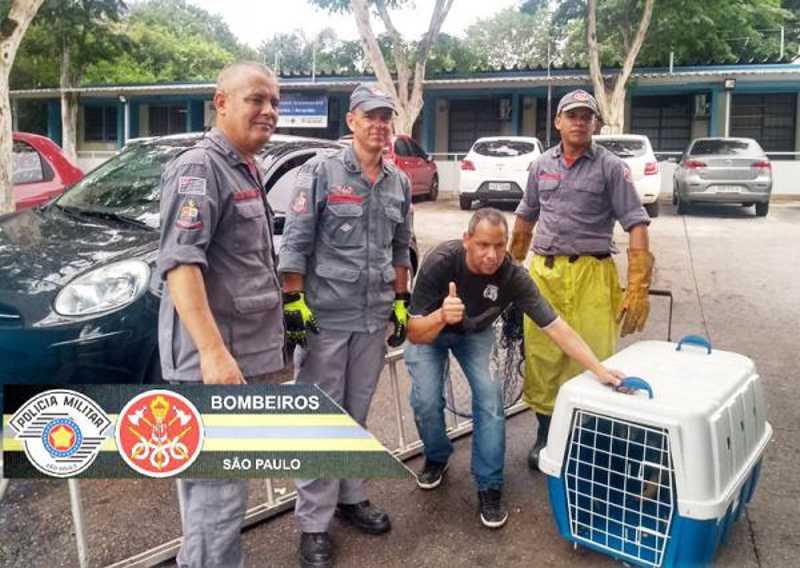 Bombeiros da Polícia Militar de SP salvam cachorro que caiu no rio na capital - Foto: Bombeiros da PMSP