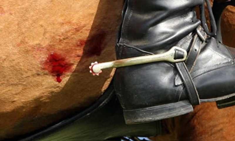 Lei que regula 'montaria' em animais de rodeio é inconstitucional