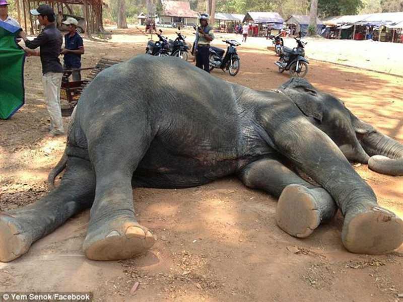 Leis dos direitos dos animais naquele país asiático não são atualizadas... desde 1907