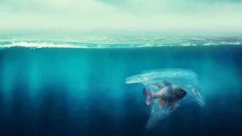 Novo estudo indica que plásticos já invadiram 'berçários' de larvas de peixes