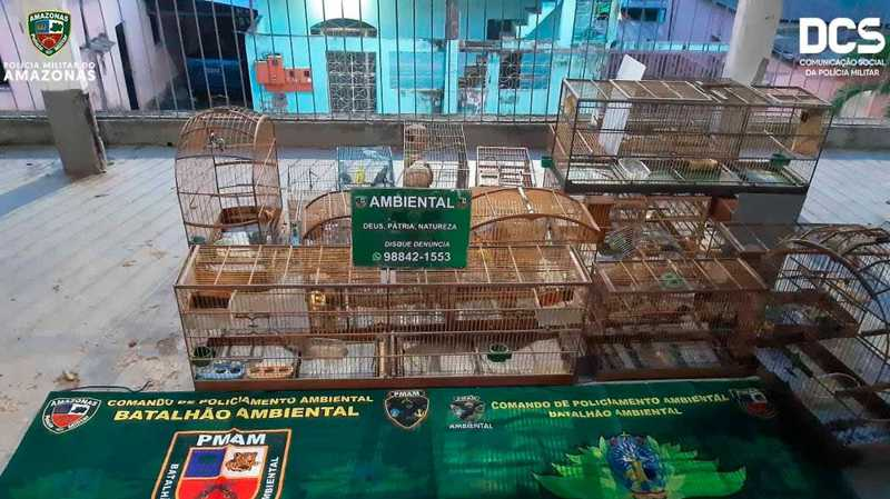 48 pássaros silvestres em situação de maus-tratos foram apreendidos no sábado (30) em Manaus — Foto: Divulgação/Polícia Militar