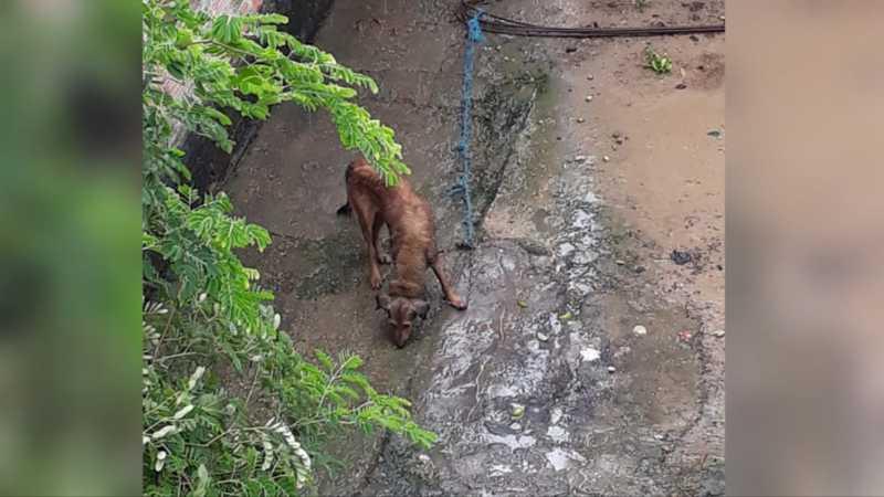 Mulher é denunciada por maltratar cachorro no Jorge Teixeira, em Manaus