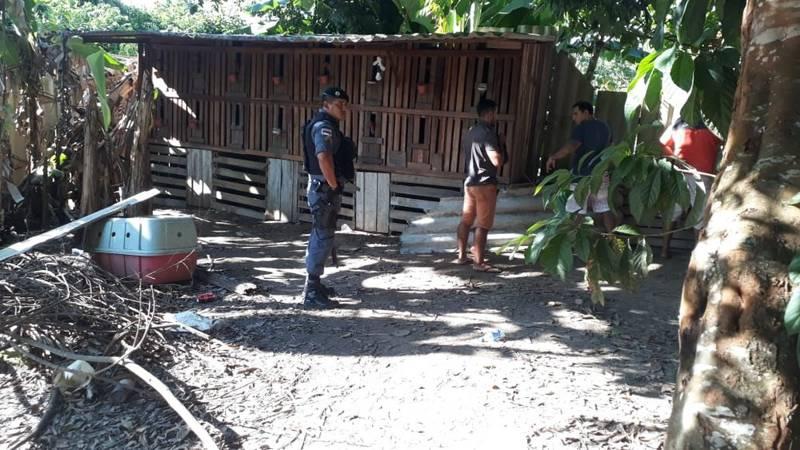 Dezesseis homens são detidos suspeitos de participarem de rinha de galos em Tefé, no AM