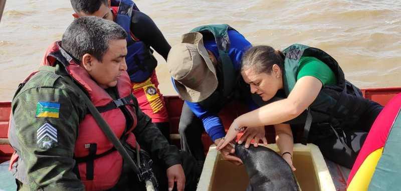 Animal recebeu cuidados durante o translado, por veterinários do Bioparque da Amazônia — Foto: Batalhão Ambiental/Divulgação