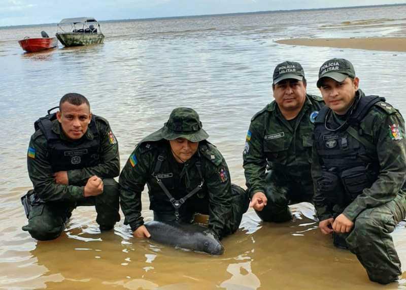 Resgate foi feito com apoio de policiais — Foto: Batalhão Ambiental/Divulgação
