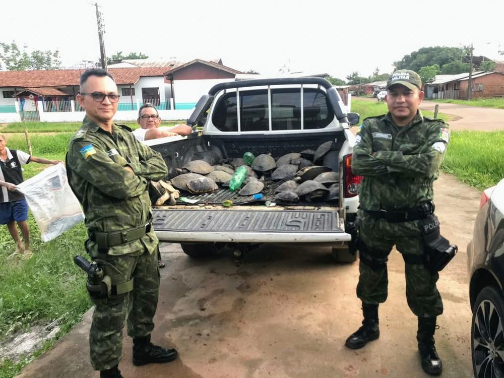 Animais serão soltos na reserva de onde foram furtados — Foto: Batalhão Ambiental/Divulgação