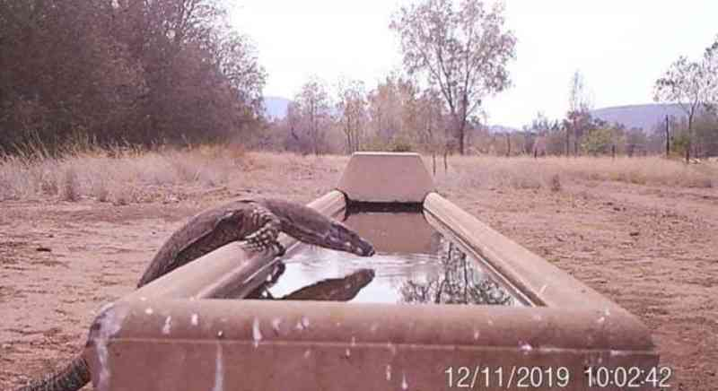 Bebedouro de fazenda vira oásis de animais silvestres na Austrália
