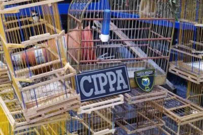 Cippa resgata pássaros que são devolvidos à natureza em Porto Seguro, BA