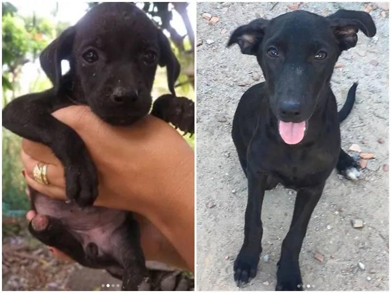 'Estão cortando as patas dos cães', denuncia ONG de Santo Antônio de Jesus, BA