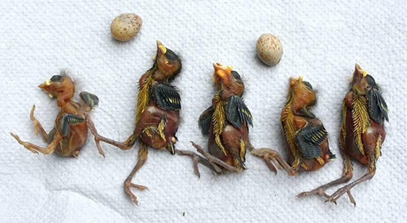 Aves encontradas mortas nos ninhos contaminados com pesticida