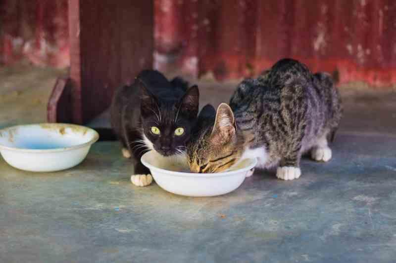 Idoso suspeito de matar 24 gatos a pauladas é denunciado no Ceará