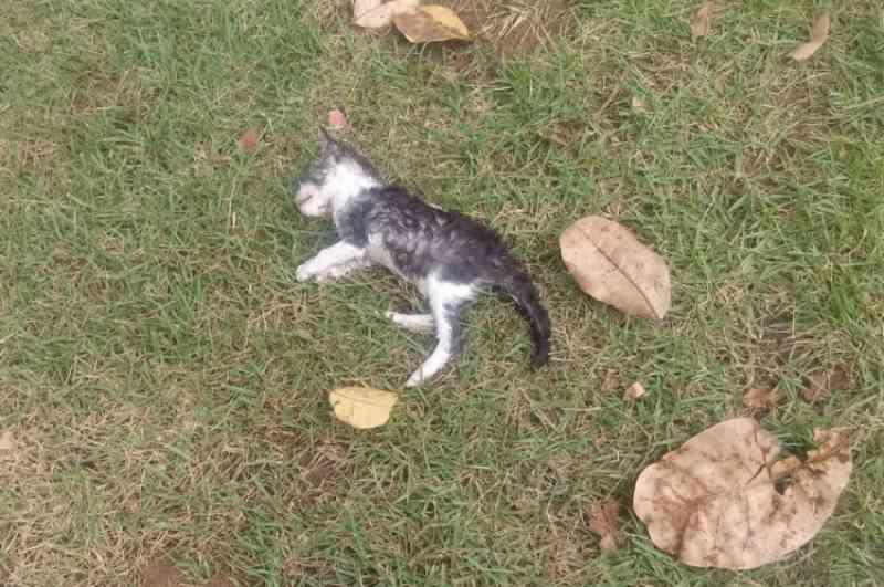 Fortaleza: sobe para 60 o número de gatos mortos no Parque do Cocó nos últimos meses