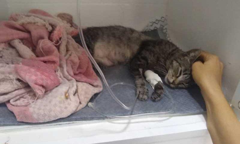 A gatinha Cheeta sobreviveu (Foto: Arquivo Pessoal)