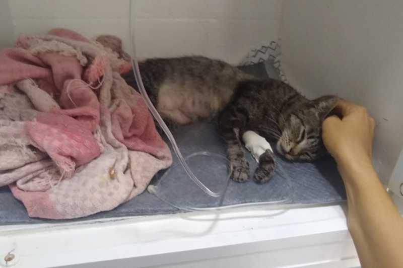 Cinco gatos são encontrados mortos em residência universitária da UFC; suspeita é de envenenamento