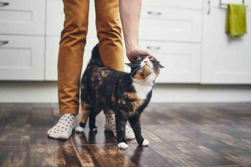 Número de gatos adotados bate recorde, revela pesquisa de abrigos canadenses