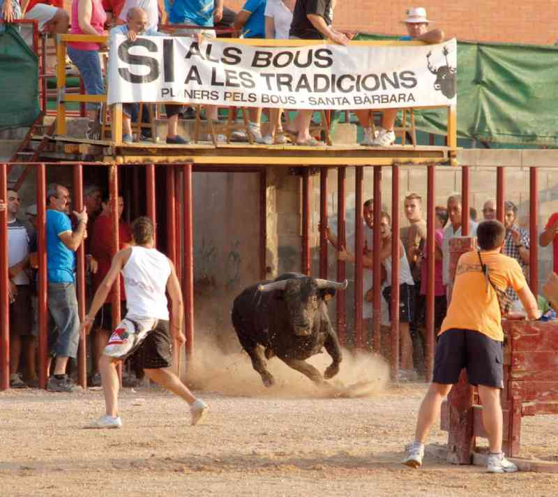 Regiões da Catalunha se negam a proibir os correbous