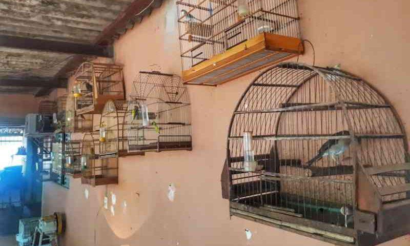 Polícia Militar encontra 27 pássaros silvestres em Brazlândia, DF