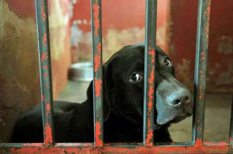 Pena para quem comete maus-tratos a animais pode chegar a 5 anos de prisão