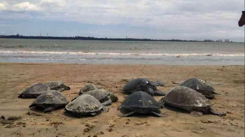 Tartarugas, arraias e peixes são encontrados mortos em rede de pesca ilegal em Vitória, ES