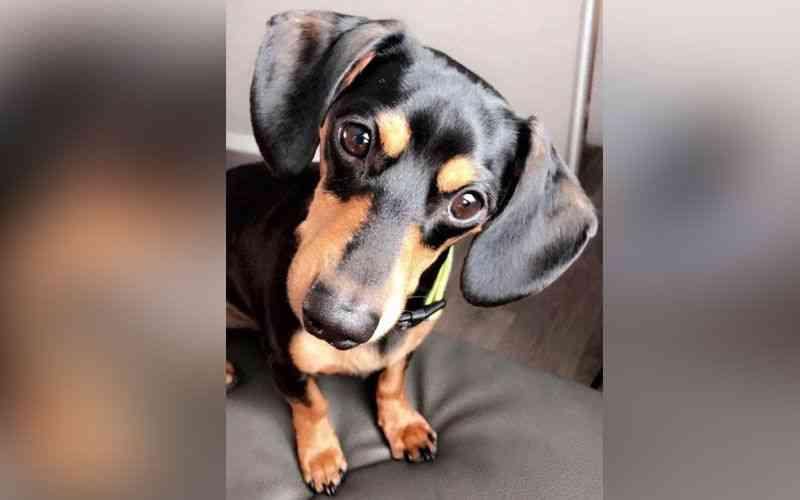 Cão é sacrificado por engano em clínica veterinária e família se desespera