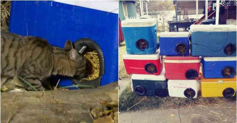 Homem transforma caixas térmicas descartadas em casinhas para gatos de rua