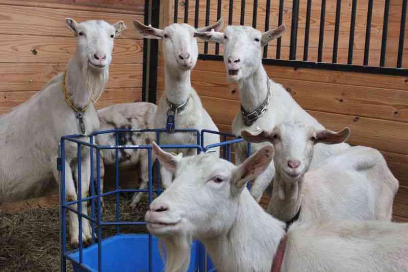 As penas federais para a crueldade animal nos EUA foram expandidas. Assim como as leis de Connecticut têm funcionado há 10 anos