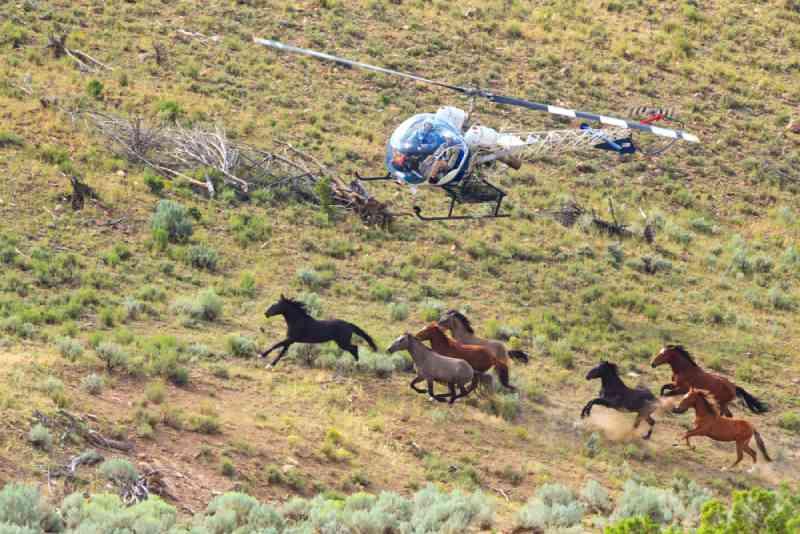 Parlamentares se unem para exigir um fim ao orçamento para os agrupamentos e remoções cruéis de cavalos selvagens