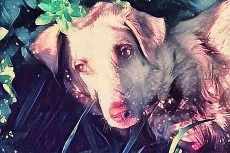 Retirada arma a caçador que matou cadela e a arrastou pela estrada na Espanha
