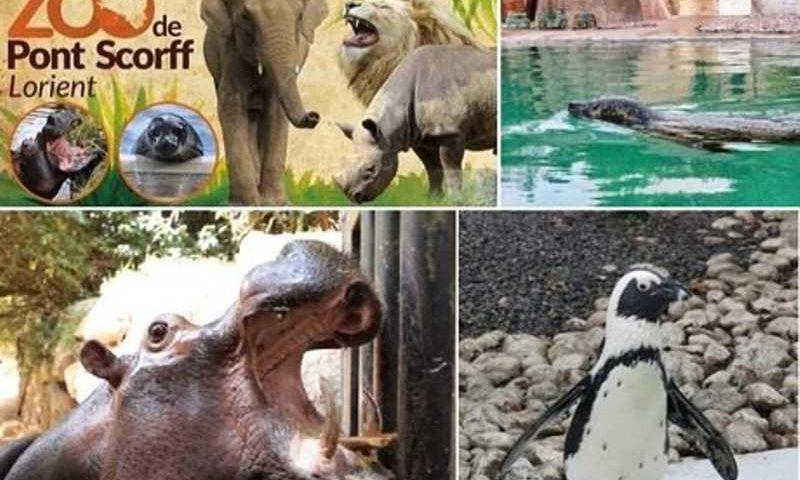 Vaquinha online salvou zoo Pont Scorff. Imagens: ONG Rewild / Montagem: R7