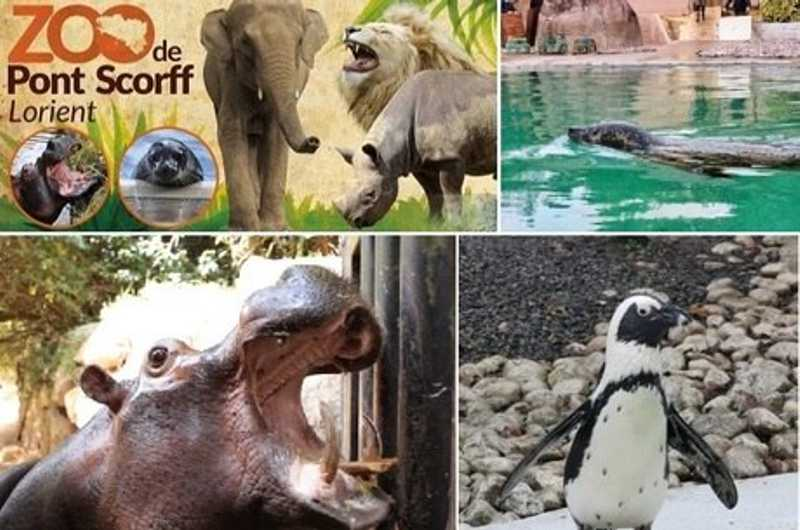 Mais de 22 mil pessoas compram zoo francês para salvar animais