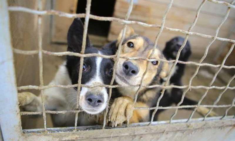 Alto Paraíso deverá tomar série de medidas sobre apreensão de animais em áreas públicas (Foto: Reprodução)