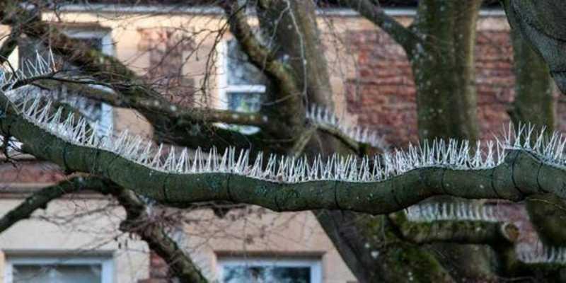 Mecanismos anti-pássaros instalados em árvores de cidade inglesa para proteger carros de luxo