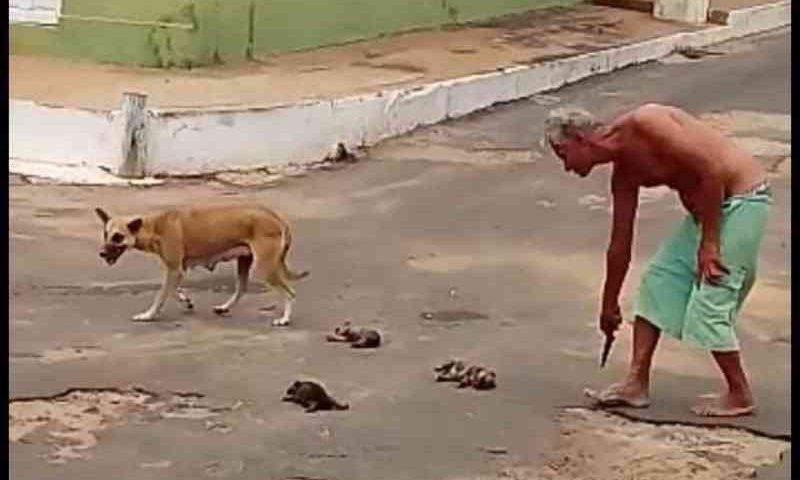 Idoso é flagrado matando filhotes de cães e gera revolta no Maranhão