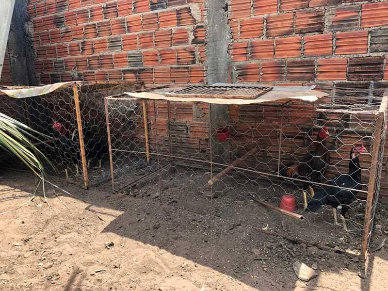 Polícia Civil prende homem suspeito de realizar rinha de galos no Maranhão
