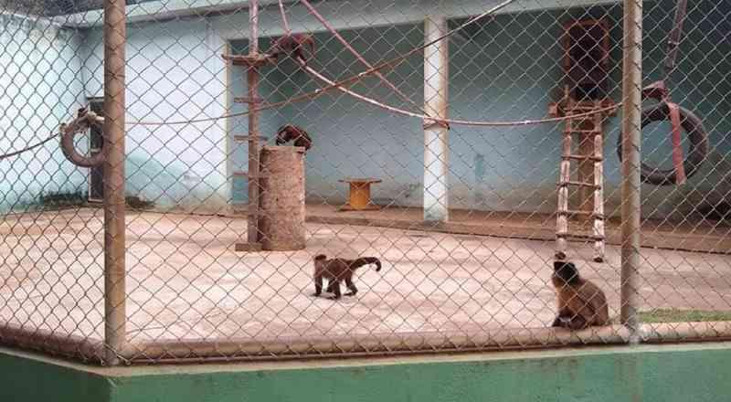 Abaixo-assinado com mais de 1 mil nomes pede que animais do Zoológico de Alfenas (MG) sejam transferidos